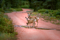 Mother Deer and babies